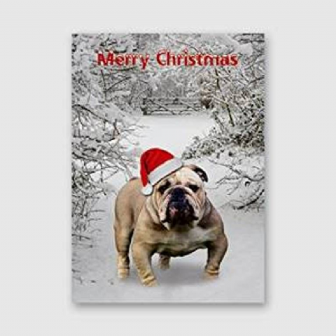 Bulldog Christmas Card pack of five
